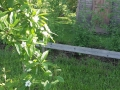 Kvetoucí mišpule před západní svatyní