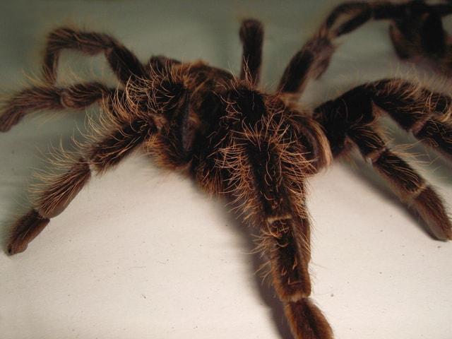 spider-1370180-640x480
